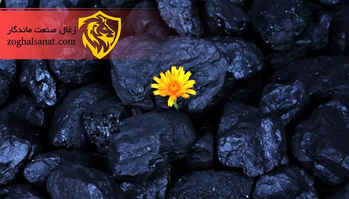 چه چوبی برای تولید زغال مناسب است؟